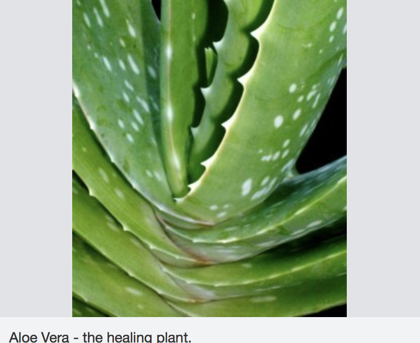 Tooth Gel: Healing Power Of Aloe Vera Proves Beneficial For Teeth And Gums, Too
